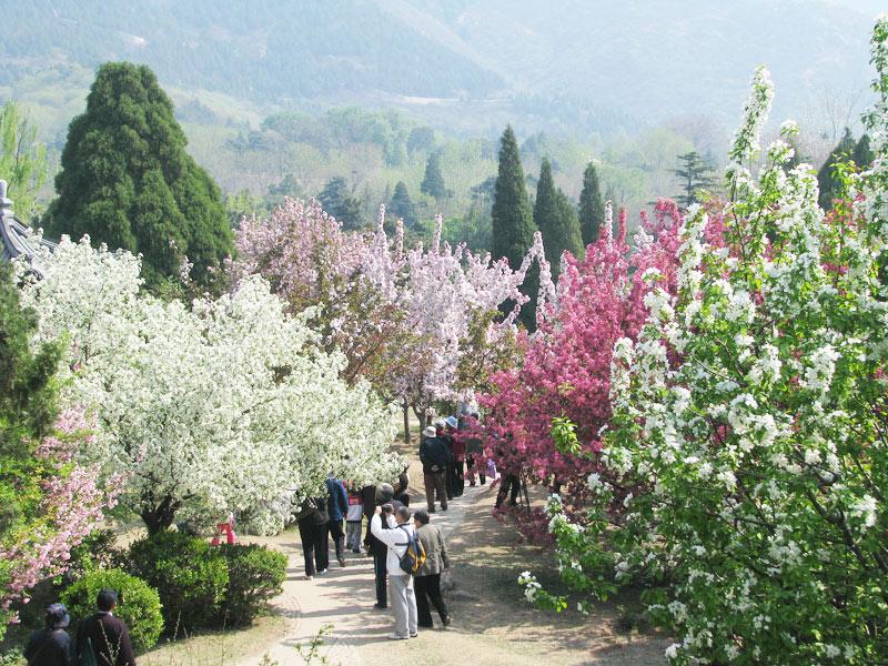 北京植物园 门票:¥55